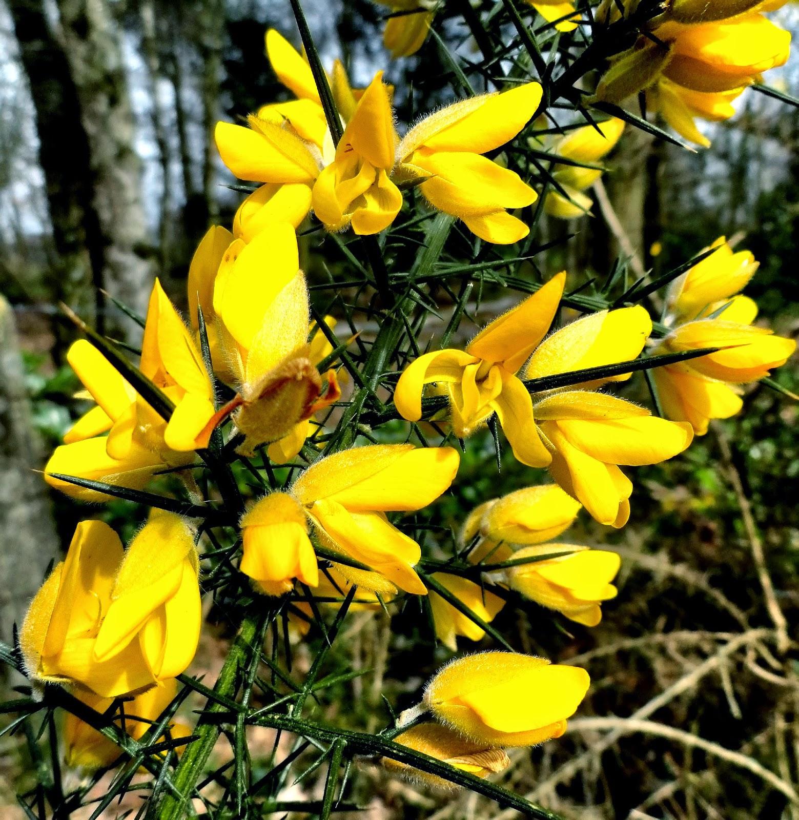 Nederlandse Bloemen Lijst de Nederlandse Rode Lijst