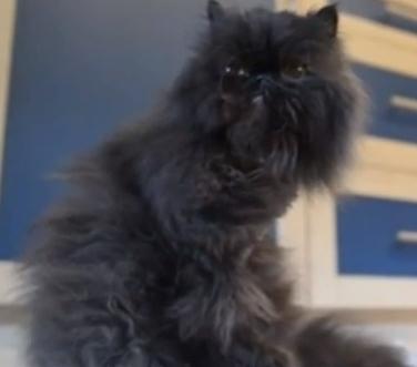 кот на двух лапах