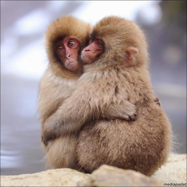 13 Gambar - Cute!!! Binatang Bersama Kapel Masing-Masing