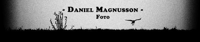 Daniel Magnusson -