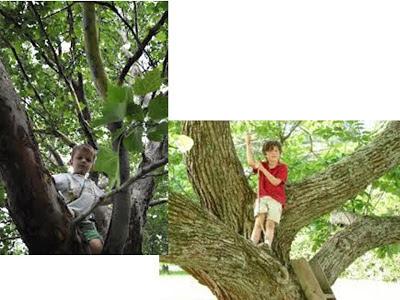 http://2.bp.blogspot.com/-yxfi5kusMdw/UI3K-mUg1VI/AAAAAAAADgc/r04OnuPcfGY/s400/treeclimbing.jpg