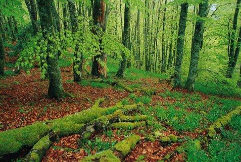 Todo sobre recursos naturales - Ambientadores naturales para la casa ...