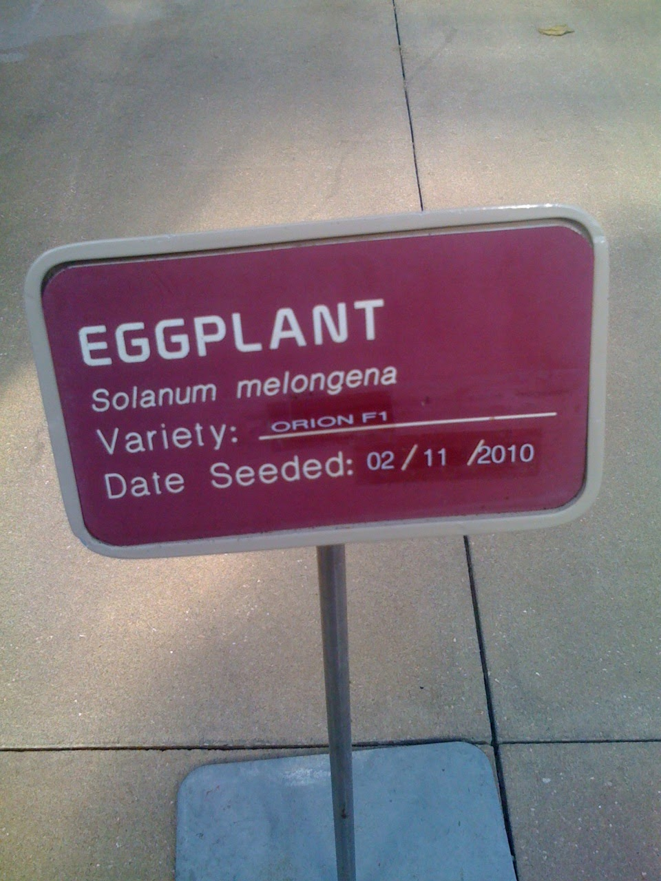 eggplant-tree-solanum-melonegena-sign-Seeds-of-Life-Tour-Epcot-Disney