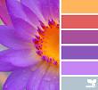 Классный сайт по подбору цветовых сочетаний