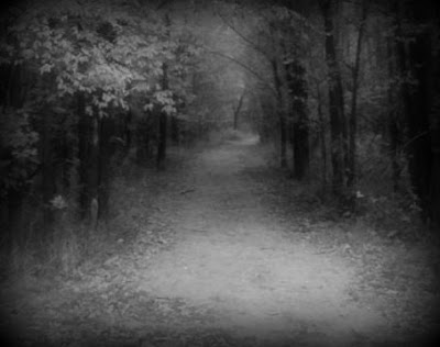 """When you are walking the trails of Wilderness Park and you run out of daylight, beware the """"Witch of the Woods""""."""