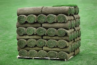 5 Rumput hias paling banyak digunakan untuk taman