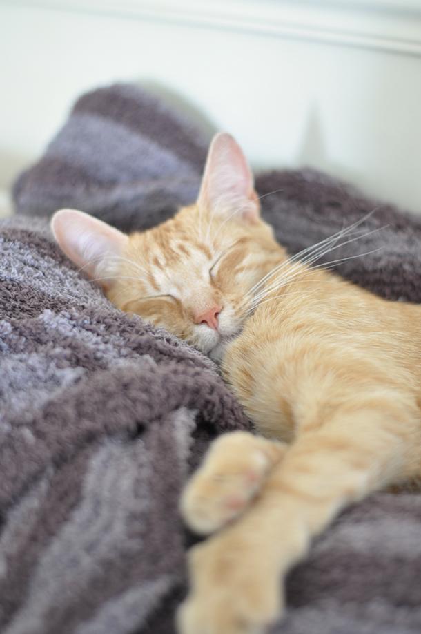 cat mignon sleeping