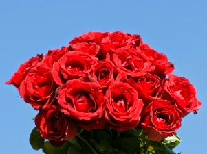 Bouquet of red roses delivery in Bolivia