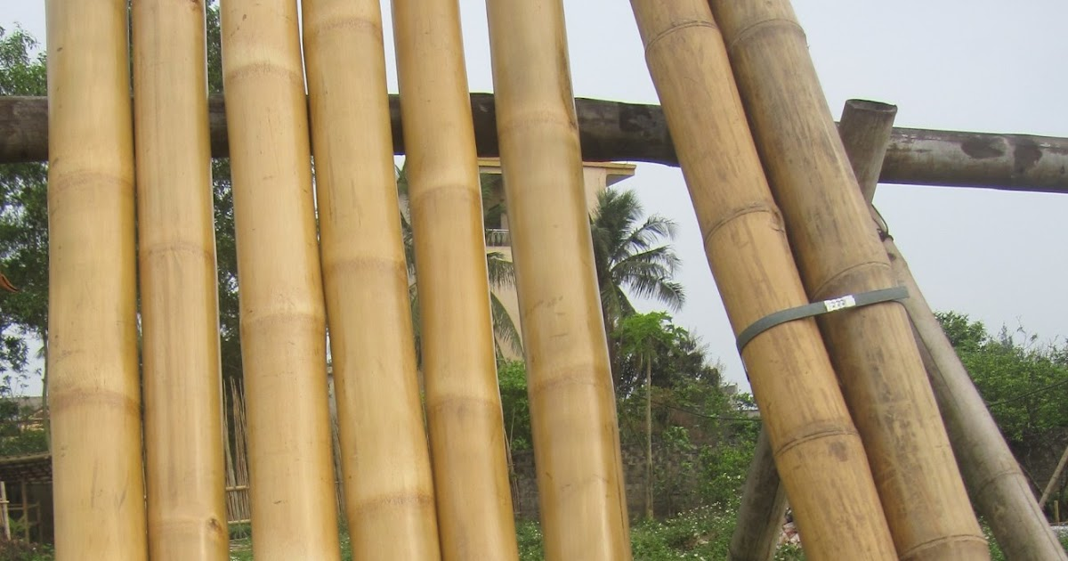 Quality Bamboo And Asian Thatch 12 Ft Wholesale Solid