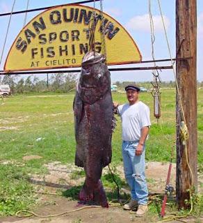 foto ikan terbesar di dunia