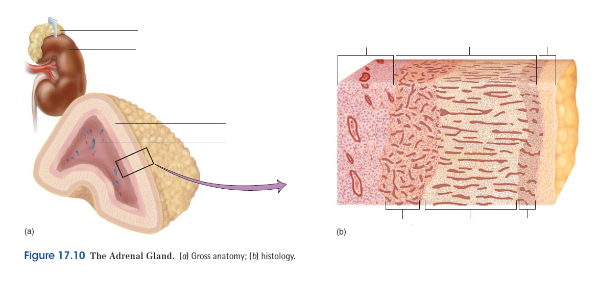 Adam Interactive Physiology 10 System Suite Free Download - livinjust