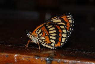 Birding Nicaragua