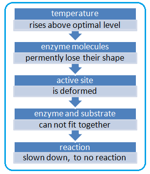 20.Factors affecting the rate of enzyme-catalysed reactions ...