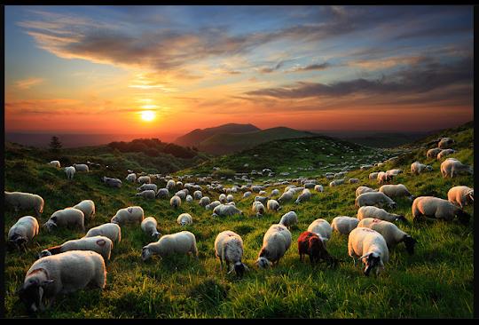 Ovelhas e céu