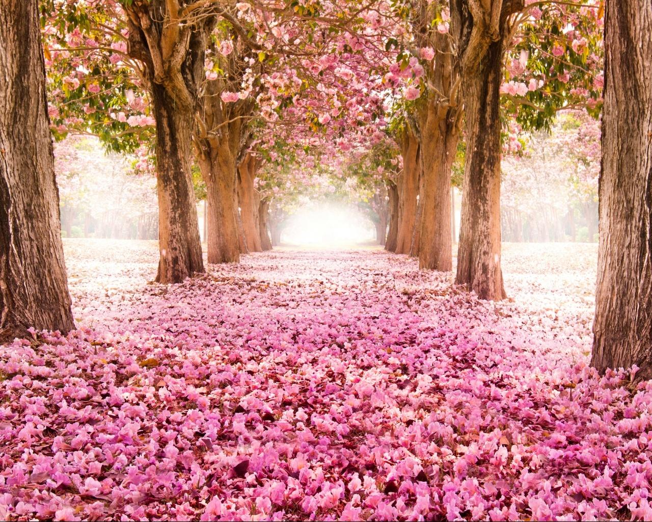 kartinki скачать красивые картинки и обои  - картинки красивые скачать бесплатно без регистрации