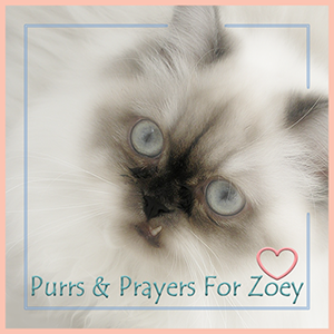 Purrs and Prayers for Zoey