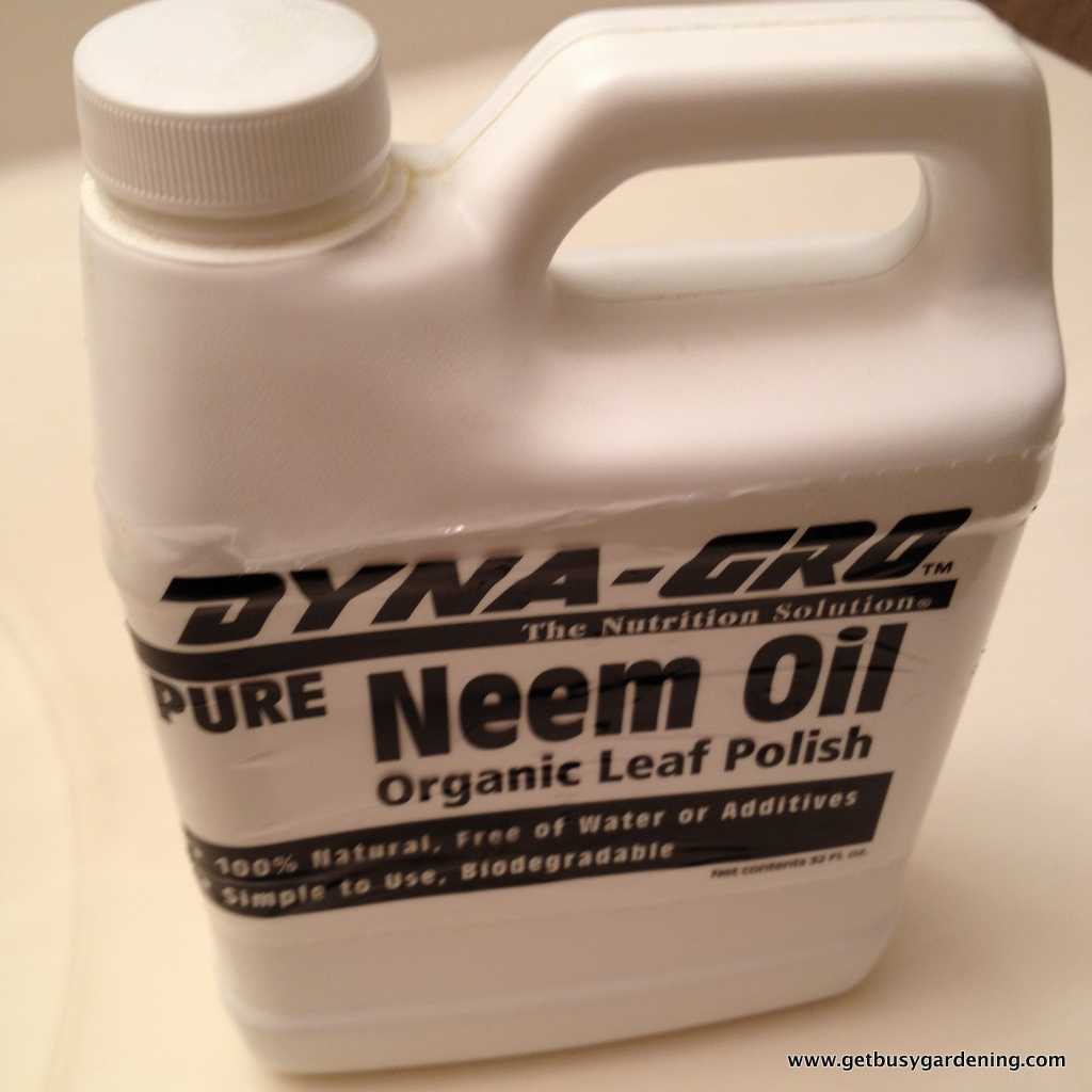 Neem oil as organic pest control