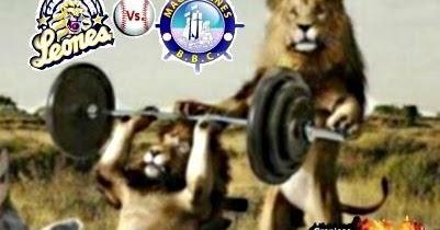 leones asesinos de hienas - Videos | Videos relacionados