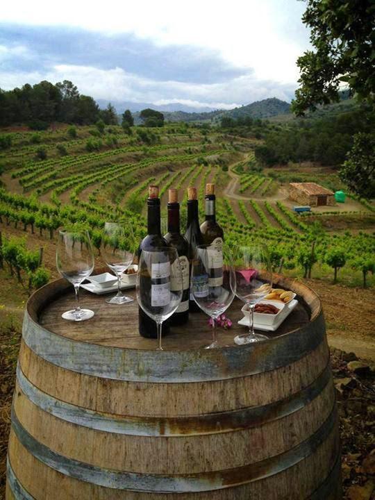 Foto cata de vinos en la viña