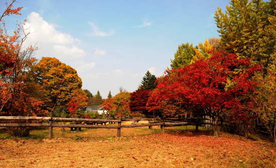 Nami Island Winter Sonata