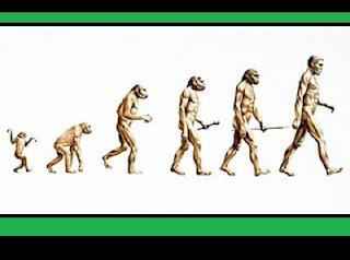 Descoberta de animais terrestres com 333 milhões de anos. Uma equipe de pesquisadores do Museu de Queensland, na Austrália, chegou a uma conclusão surpreendente e de consequências científicas inesperadas. Ao analisar os restos fósseis da fêmea de um tetrápode Ossinodus pueri, eles constataram que o animal havia sofrido uma fratura que só poderia ser causada por uma forte queda no solo. O fato não seria inusitado se a datação dos restos não indicasse que eles possuem 333 milhões de anos de idade. Ou seja, o animal teria vivido antes dos primeiros tetrápodes saírem da água para habitar na terra, segundo afirmam todas as teorias sobre a evolução dos vertebrados.