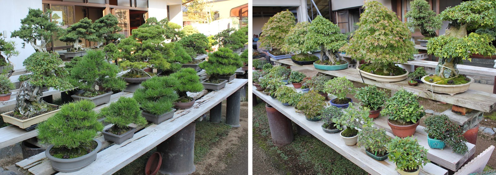 Kigawa39s Bonsai Blog Shosei En Bonsai Nursery Kyoto
