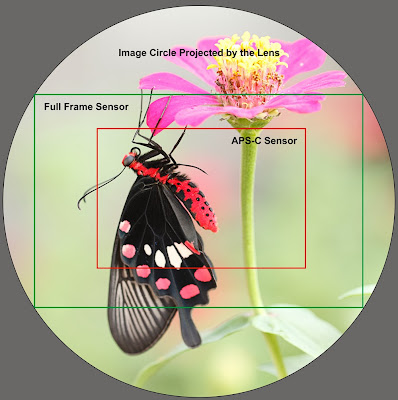 Full Frame Camera Sensor Vs APS C Camera Sensor