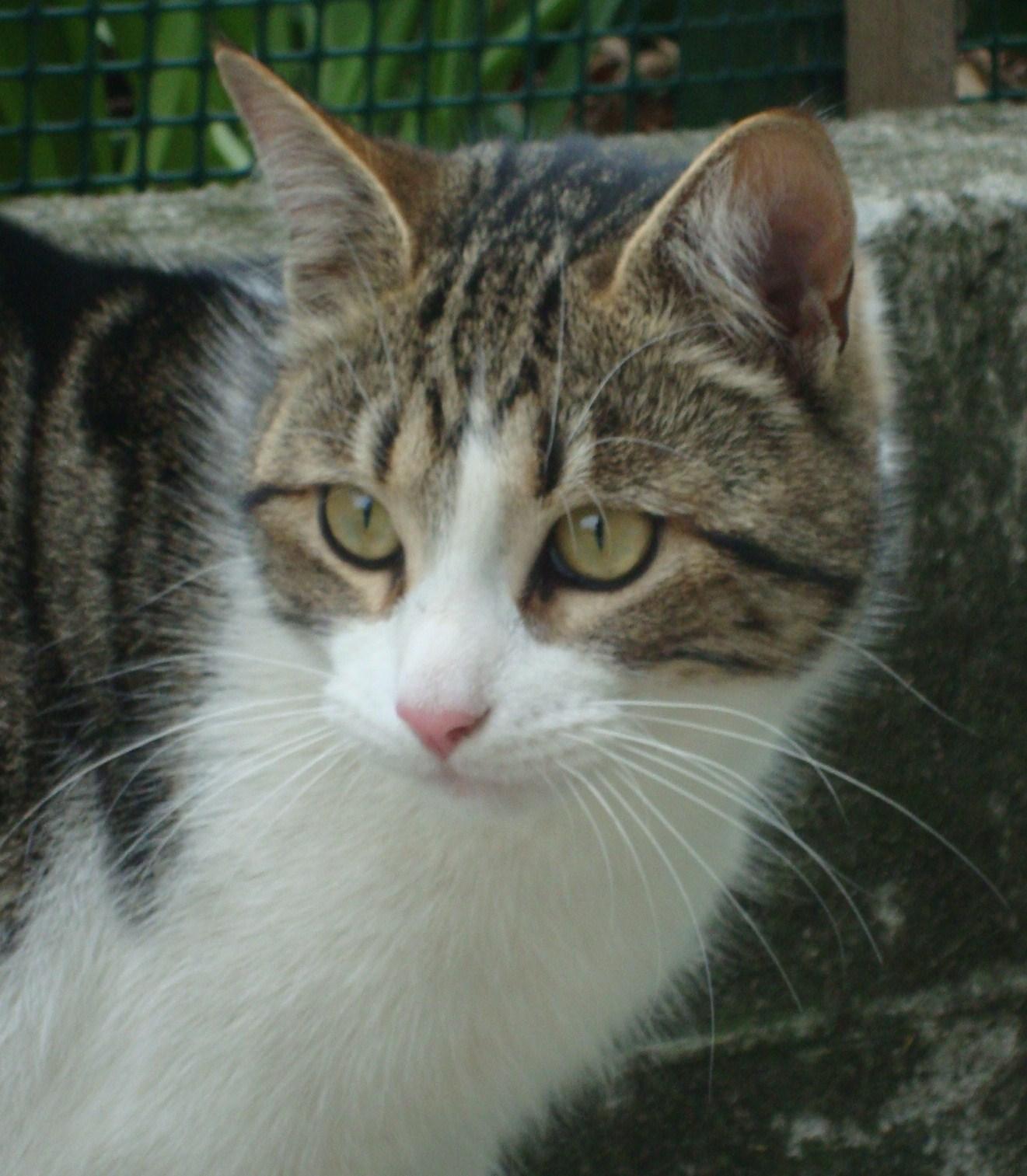 Decorarte ritratto gatto europeo - Chi ha dipinto il bagno turco ...
