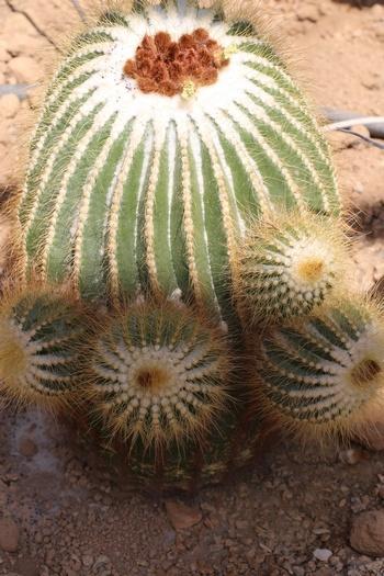 Aïe aïe aïe, les cactus !