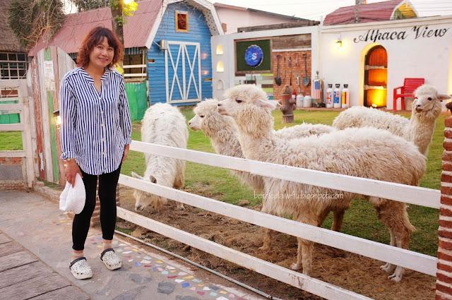 Betrice my travel my life my style bangkok for Alpaca view farm cuisine
