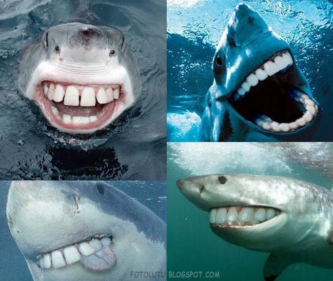 Gambar Terbingkai kali ini adalah ikan hiu. Hiu merupakan ikan yang