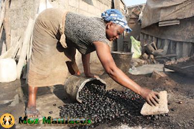Elas ajudam a castanha e descascam (geralmente usam pedras para parti-las)