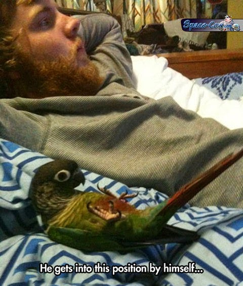 funny cute parrot picture