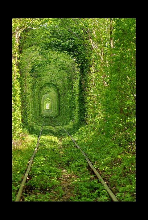"Love Tunnel - Tree Lined Train Tunnel in the Ukraine - image by Oleg Gordienko via 500px com - as seen on linenandlavender net - ""Take me there."" page - http://www.linenandlavender.net/p/blog-page_5.html"