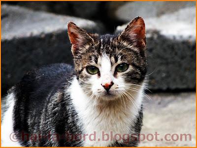 pisica casa lorabella baile herculane
