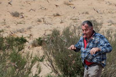 swarm of locusts arriving in Israel