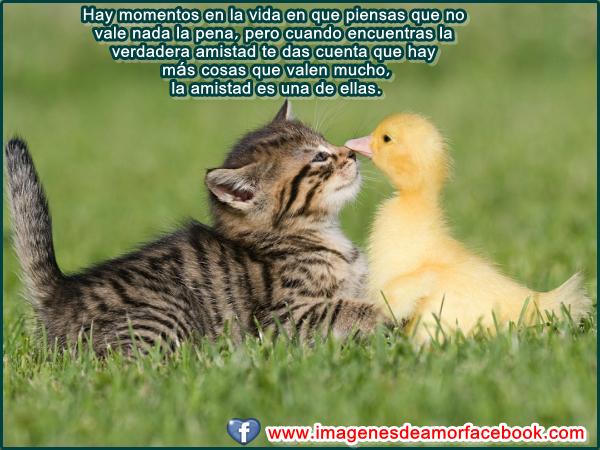 Imágenes de amistad con frases para facebook (Imagenes para Facebook)
