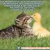 Imágenes de amistad con frases para facebook