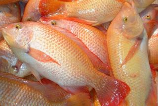 Resep Ikan Nila Enak Gurih cara memasak ikan nila