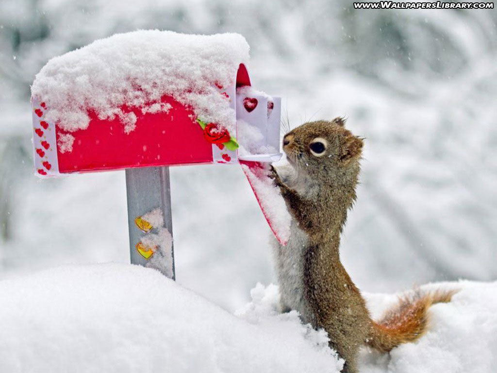 http://2.bp.blogspot.com/-z322oa7cs0w/UNQtuL-jlqI/AAAAAAAAA-8/_Fo8B1wPwHc/s1600/Squirrel%20Funny%20Photo.jpg
