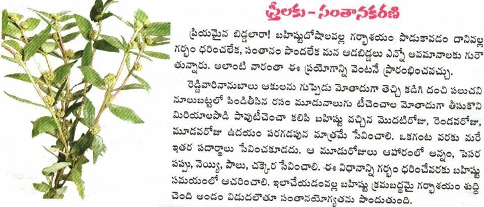 Pregnant Women Health Tips In Telugu