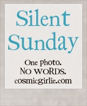 http://www.cosmicgirlie.com/2015/04/05/silent-sunday-105/