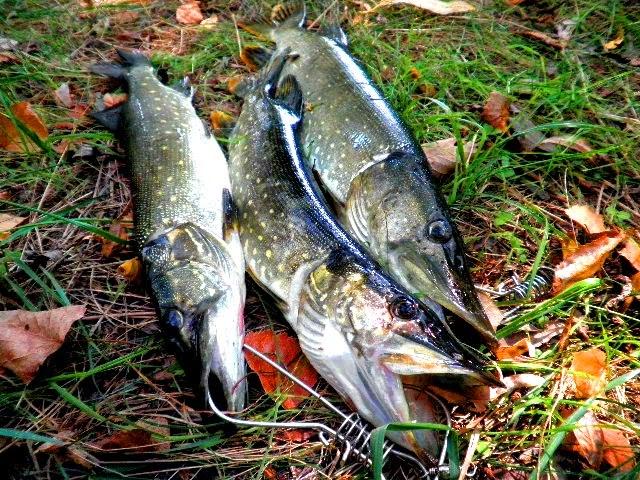 Рыбалка на Осколе.