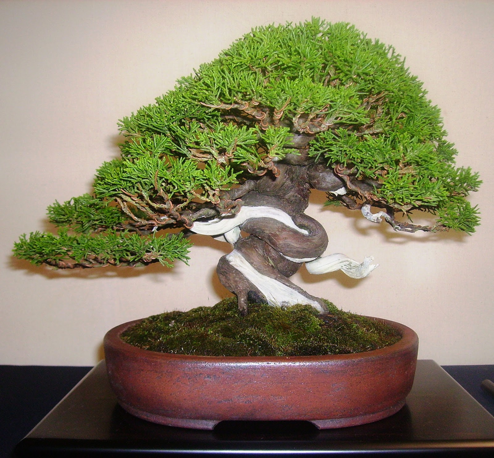 Bespoke Bonsai Stands Shohin UK Event 2013