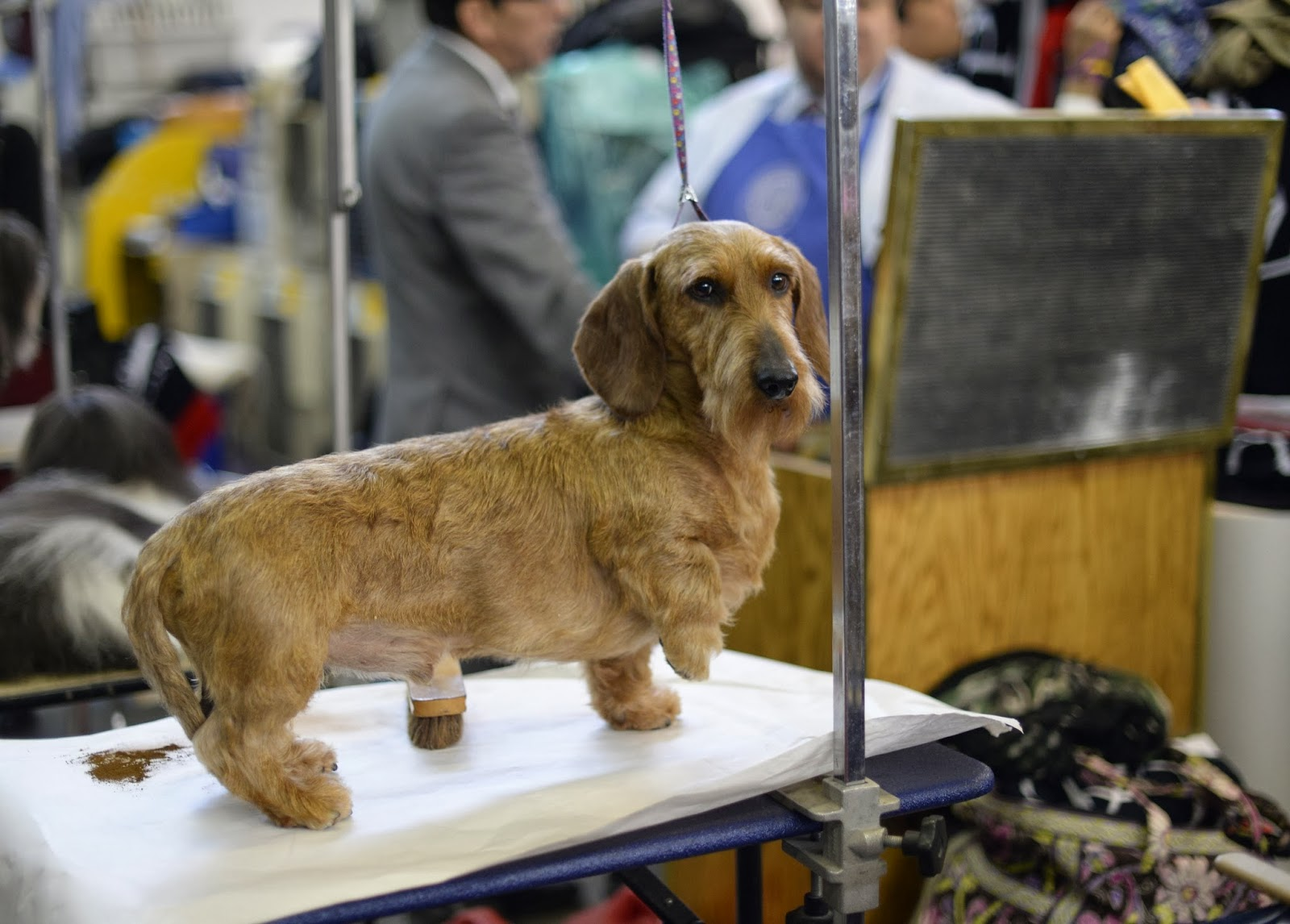 138th Annual Westminster Dog Show HD Pictures