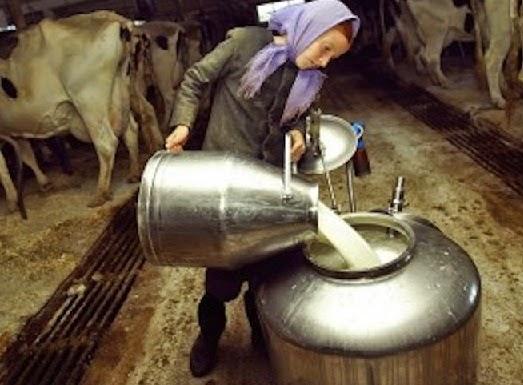 انواع الحليب - الخليب الطازج الخام