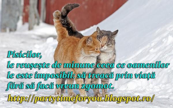 Pisicilor le reuşeşte de minune ceea ce oamenilor le este imposibil să treacă prin viaţă fără să facă vreun zgomot