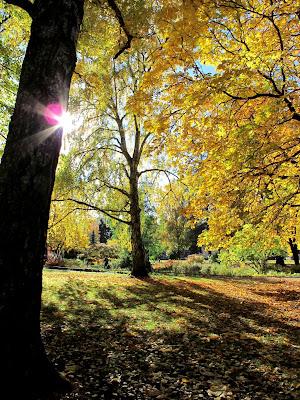 autumn-in-botaniska-trädgården-uppsala-photo-by-susan-wellington-1024