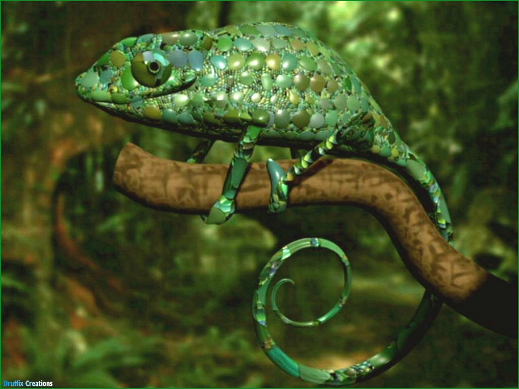 A 2 Z Reptiles Colonia Izalco:...
