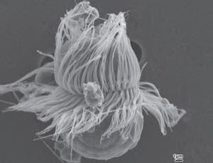 Photosythesis human biology hybrid
